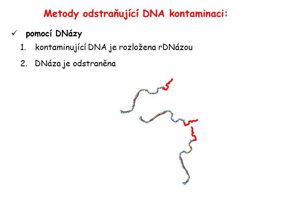 pomocí DNázy 1.kontaminující DNA je rozložena rDNázou 2.