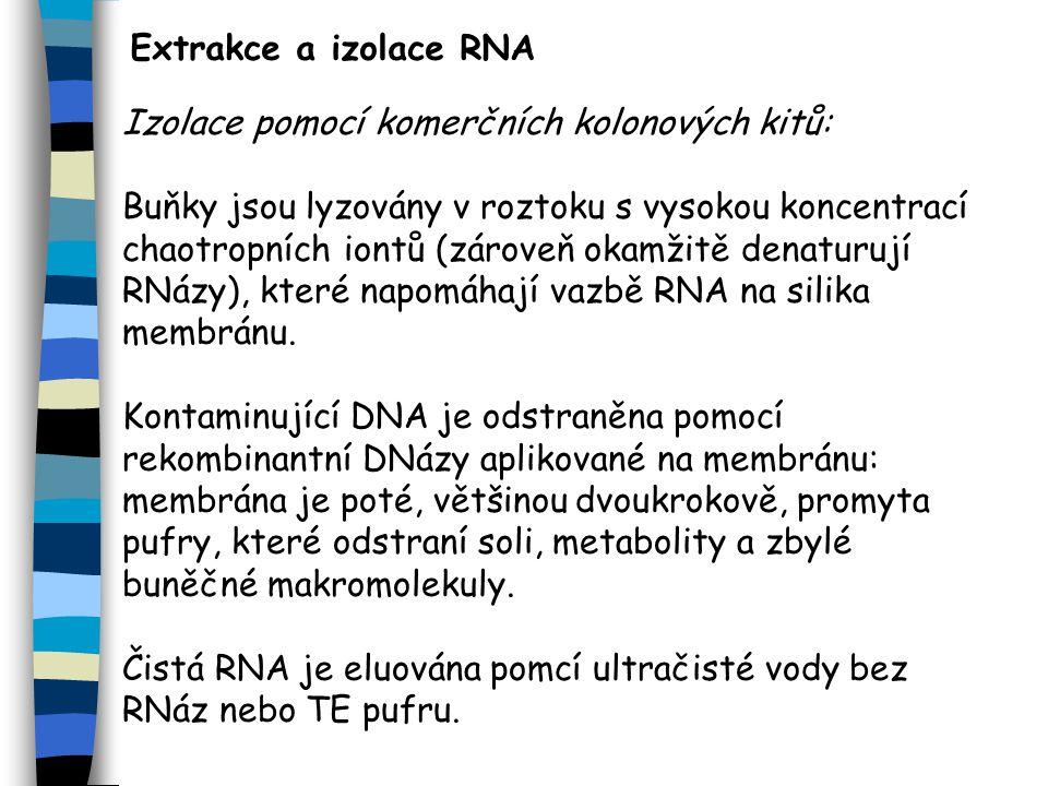 Extrakce a izolace RNA Izolace pomocí komerčních kolonových kitů: Buňky jsou lyzovány v roztoku s vysokou koncentrací chaotropních iontů (zároveň okamžitě denaturují RNázy), které napomáhají vazbě RNA na silika membránu.