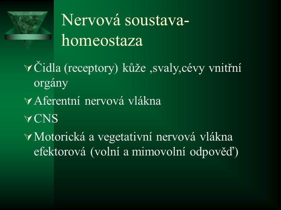Nervová soustava- homeostaza  Čidla (receptory) kůže,svaly,cévy vnitřní orgány  Aferentní nervová vlákna  CNS  Motorická a vegetativní nervová vlá