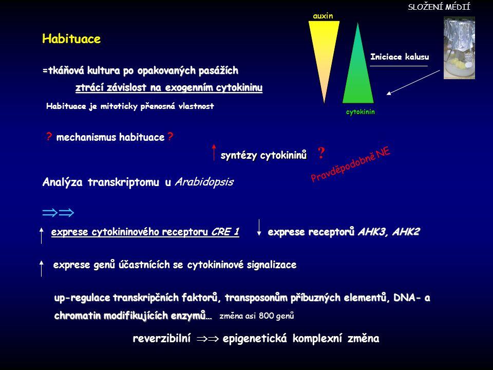 Habituace =tkáňová kultura po opakovaných pasážích ztrácí závislost na exogenním cytokininu ztrácí závislost na exogenním cytokininu cytokinin auxin Iniciace kalusu Habituace je mitoticky přenosná vlastnost syntézy cytokininů .