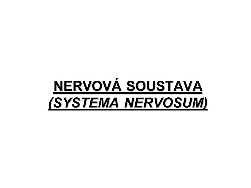 FUNKCE NERVOVÉ SOUSTAVY řídící funkce nervové řízení činnosti orgánů základní vlastností je excitabilita (iritabilita, schopnost podráždění) a generování elektrických nervových impulzů