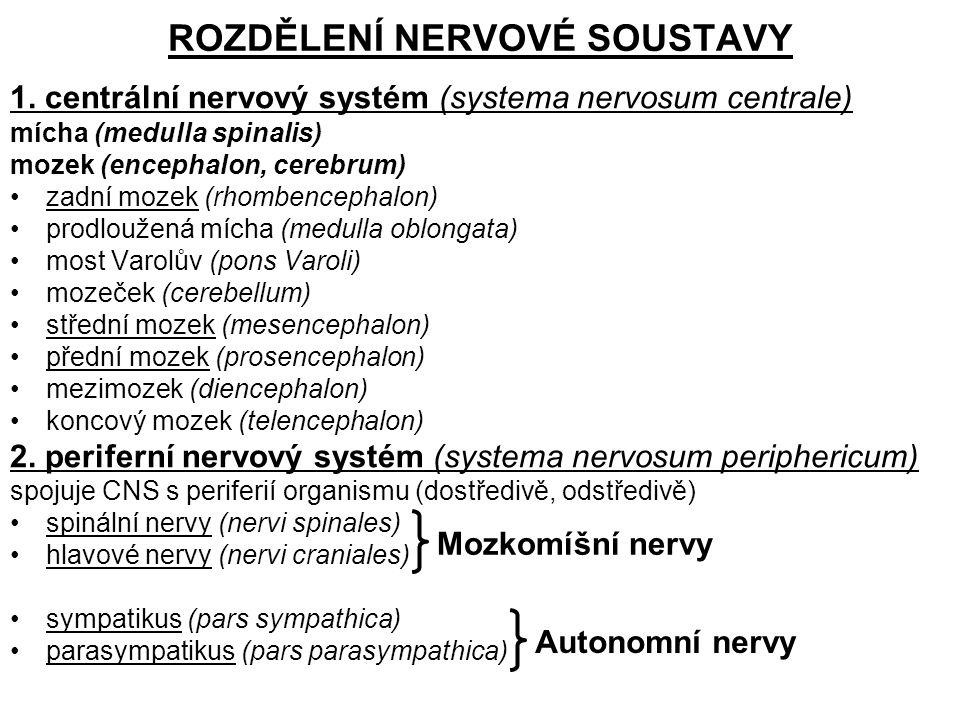 ROZDĚLENÍ NERVOVÉ SOUSTAVY 1. centrální nervový systém (systema nervosum centrale) mícha (medulla spinalis) mozek (encephalon, cerebrum) zadní mozek (