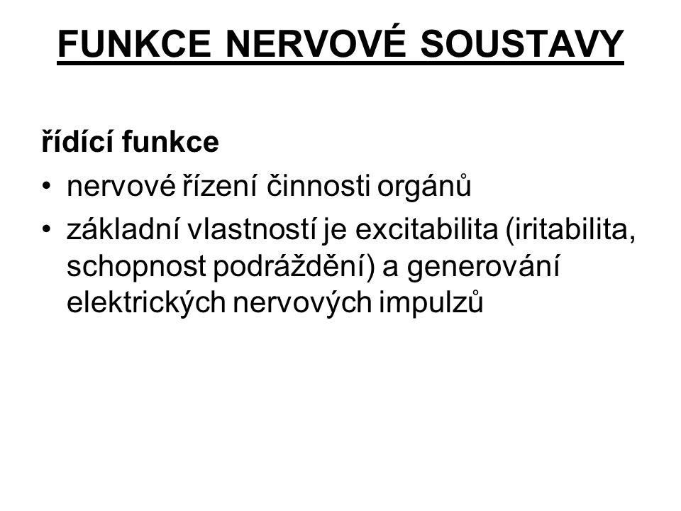 Nervová buňka (neuron) základní složka nervové soustavy vysoce specializované (vzrušivost, vodivost) Neuroglie podpůrná, nutritivní, obranné a další funkce