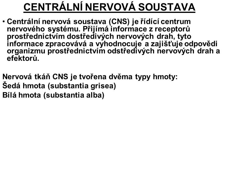 CENTRÁLNÍ NERVOVÁ SOUSTAVA Centrální nervová soustava (CNS) je řídící centrum nervového systému. Přijímá informace z receptorů prostřednictvím dostřed