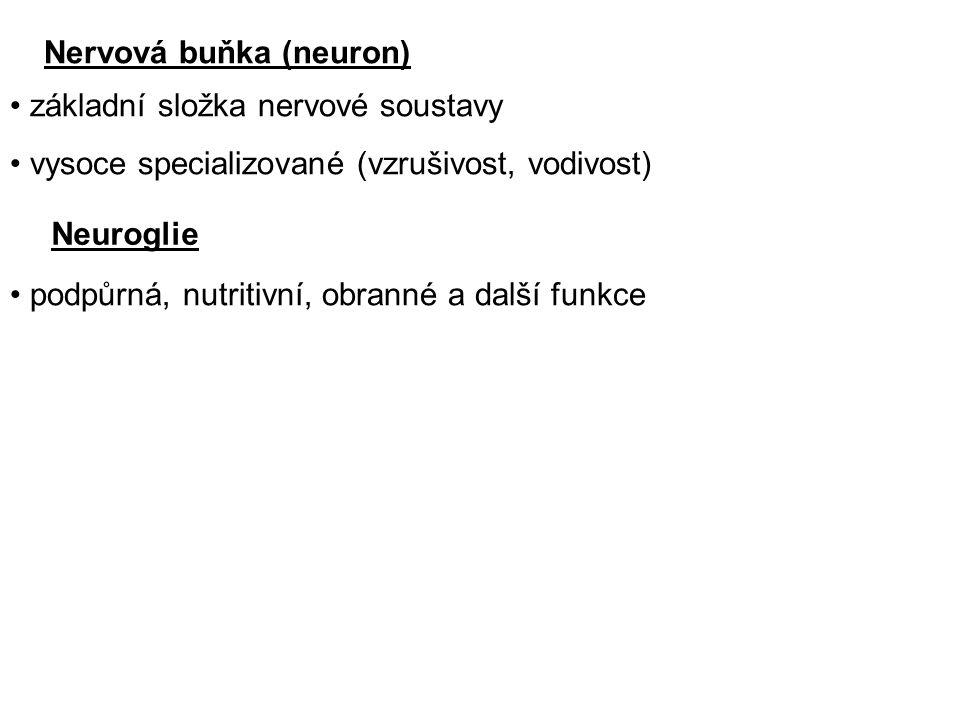 Neuron 1.tělo (perikaryon) 2.
