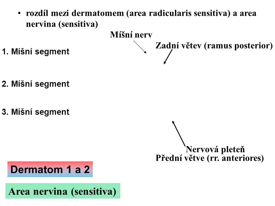 rozdíl mezi dermatomem (area radicularis sensitiva) a area nervina (sensitiva) Area nervina (sensitiva) 1. Míšní segment 2. Míšní segment 3. Míšní seg