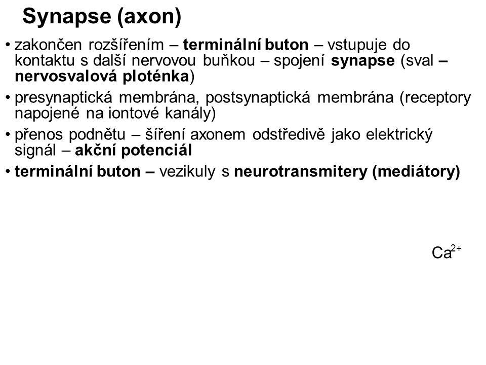 Synapse (axon) zakončen rozšířením – terminální buton – vstupuje do kontaktu s další nervovou buňkou – spojení synapse (sval – nervosvalová ploténka) presynaptická membrána, postsynaptická membrána (receptory napojené na iontové kanály) přenos podnětu – šíření axonem odstředivě jako elektrický signál – akční potenciál terminální buton – vezikuly s neurotransmitery (mediátory) Ca 2+