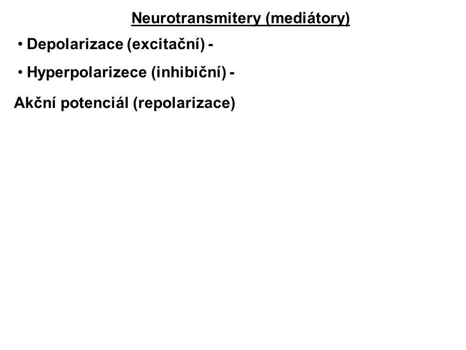 Neurotransmitery (mediátory) Depolarizace (excitační) - Hyperpolarizece (inhibiční) - Akční potenciál (repolarizace)