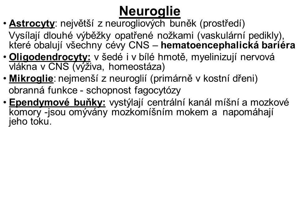 Neuroglie Astrocyty: největší z neurogliových buněk (prostředí) Vysílají dlouhé výběžky opatřené nožkami (vaskulární pedikly), které obalují všechny cévy CNS – hematoencephalická bariéra Oligodendrocyty: v šedé i v bílé hmotě, myelinizují nervová vlákna v CNS (výživa, homeostáza) Mikroglie: nejmenší z neuroglií (primárně v kostní dřeni) obranná funkce - schopnost fagocytózy Ependymové buňky: vystýlají centrální kanál míšní a mozkové komory -jsou omývány mozkomíšním mokem a napomáhají jeho toku.