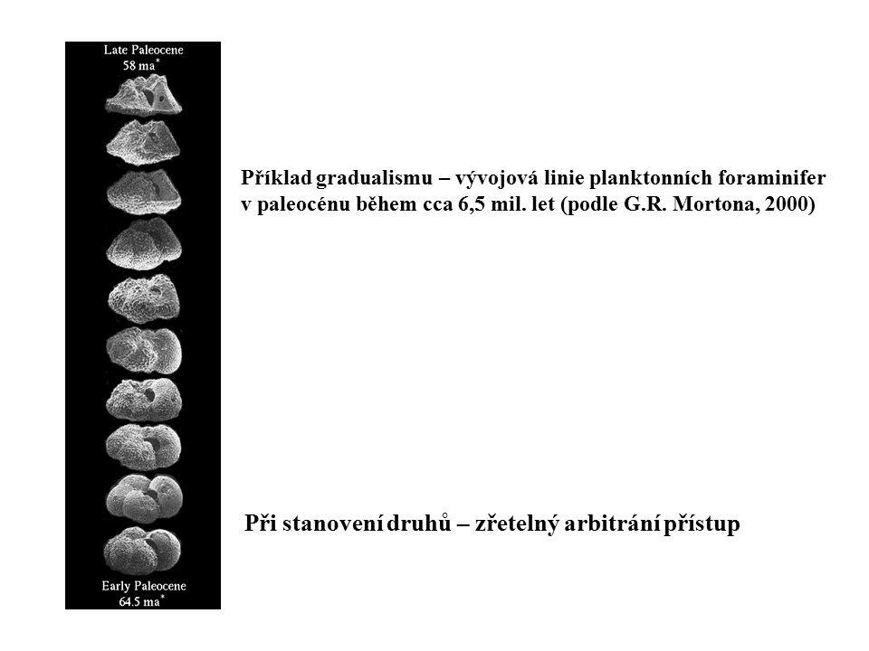 Příklad gradualismu – vývojová linie planktonních foraminifer v paleocénu během cca 6,5 mil. let (podle G.R. Mortona, 2000) Při stanovení druhů – zřet