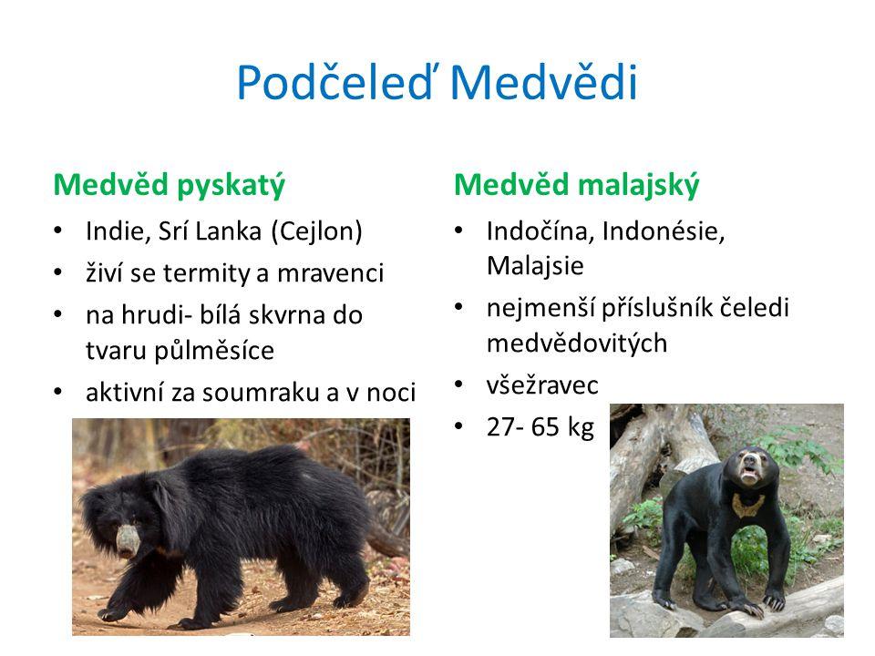 Podčeleď Medvědi Medvěd pyskatý Indie, Srí Lanka (Cejlon) živí se termity a mravenci na hrudi- bílá skvrna do tvaru půlměsíce aktivní za soumraku a v noci Medvěd malajský Indočína, Indonésie, Malajsie nejmenší příslušník čeledi medvědovitých všežravec 27- 65 kg
