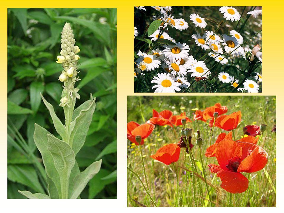 "Sitta europea Certhia familiaris ""Sithia hybrida x x Mechanismy udržující integritu druhů"