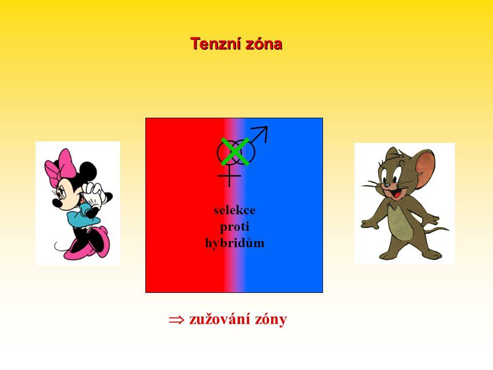 selekce proti hybridům  zužování zóny ♀ ♂  Tenzní zóna