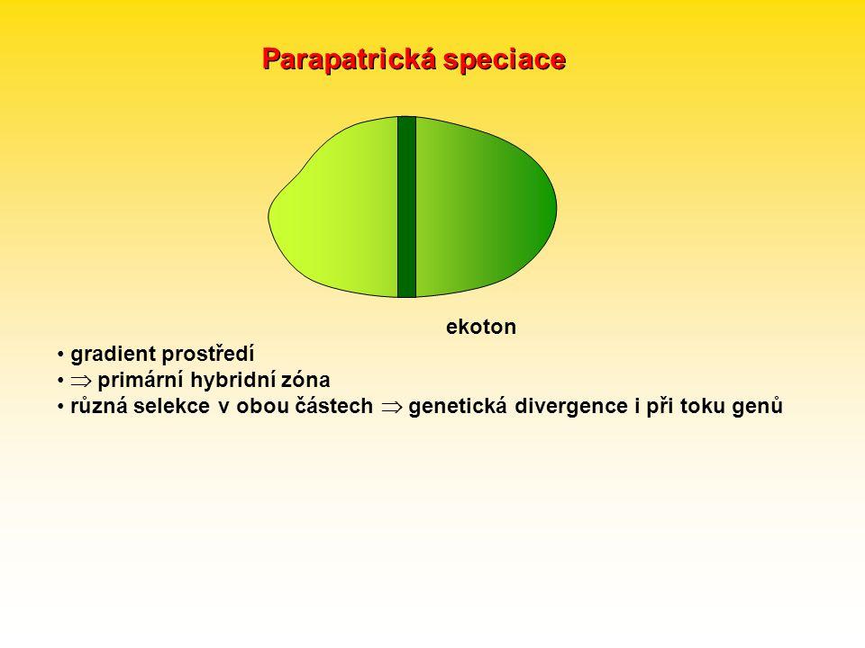 Parapatrická speciace gradient prostředí  primární hybridní zóna různá selekce v obou částech  genetická divergence i při toku genů ekoton