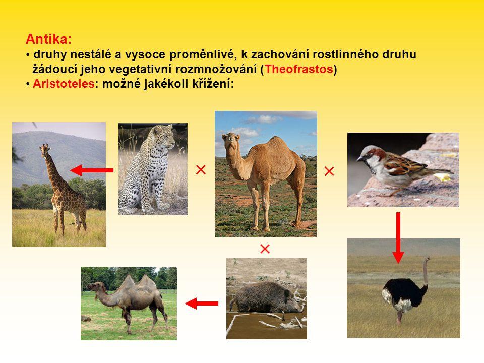 Rozpoznávací druh (RSC = recognition species concept) Paterson (1985) důraz ne na izolaci, ale na společný fertilizační systém: specifický systém rozpoznání partnera (SMRS = specific mate recognition s.) námluvy, načasování páření, výběr prostředí, zbarvení, endokrinní systém, tvar kopulačních orgánů, gametická kompatibilita, … reprodukční izolace jako vedlejší produkt Kohezní druh (CSC = cohesion species concept) Templeton (1989) důraz na mechanismy, které zachovávají morfologickou stabilitu populací kohezní mechanismy: tok genů, stabilizující selekce, vývojová omezení, reprodukční izolace aplikace i na asexuální organismy možnost mezidruhové hybridizace