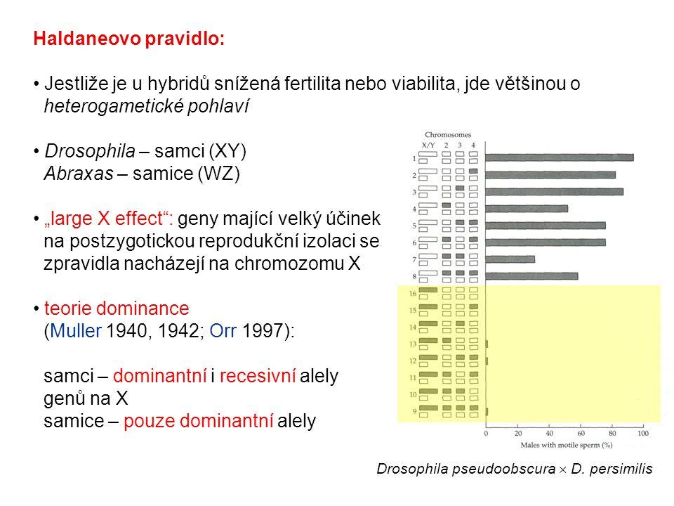 Haldaneovo pravidlo: Jestliže je u hybridů snížená fertilita nebo viabilita, jde většinou o heterogametické pohlaví Drosophila – samci (XY) Abraxas –