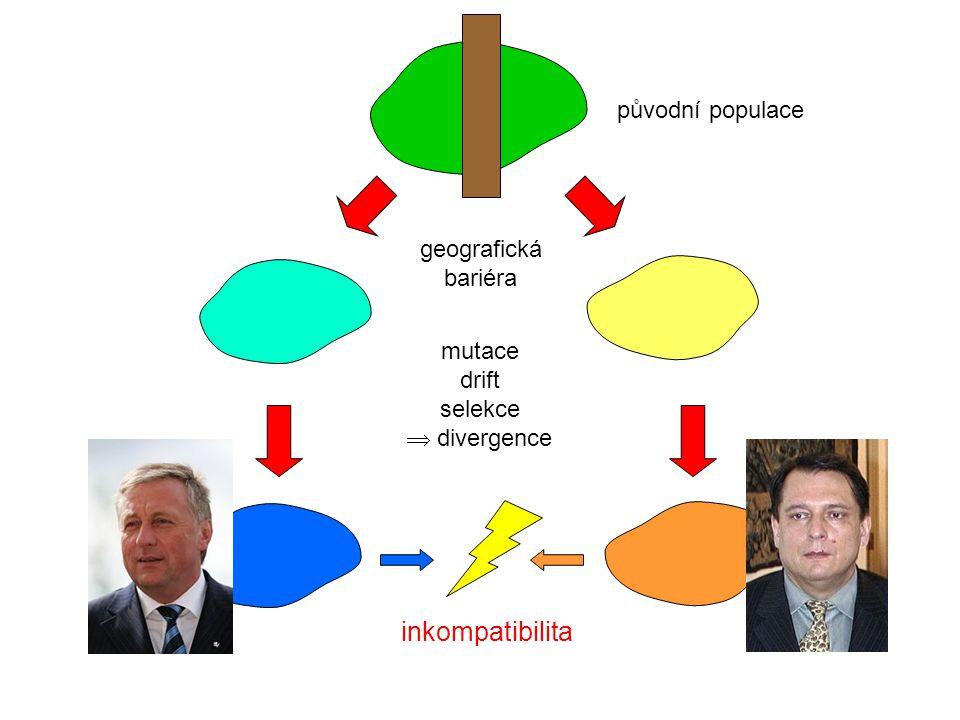 původní populace geografická bariéra inkompatibilita mutace drift selekce  divergence