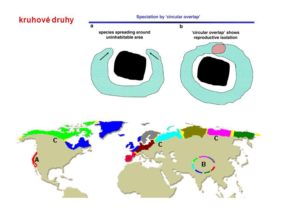 kruhové druhy