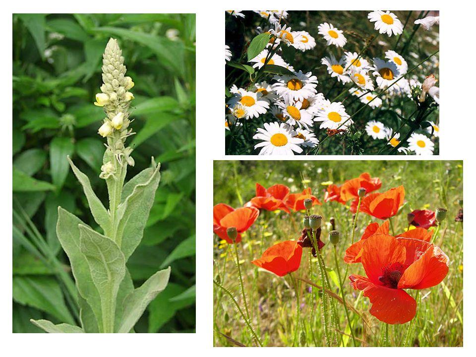 Paralelní speciace posun habitatu role přírodního výběru role pohlavního výběru (cichlidy)