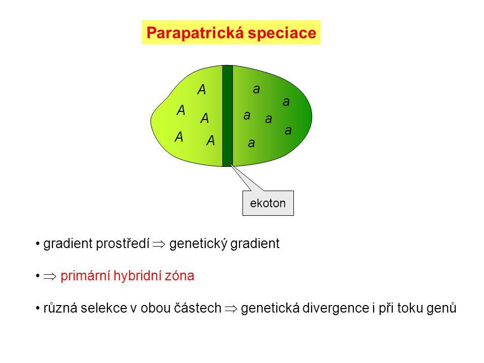 Parapatrická speciace gradient prostředí  genetický gradient  primární hybridní zóna různá selekce v obou částech  genetická divergence i při toku