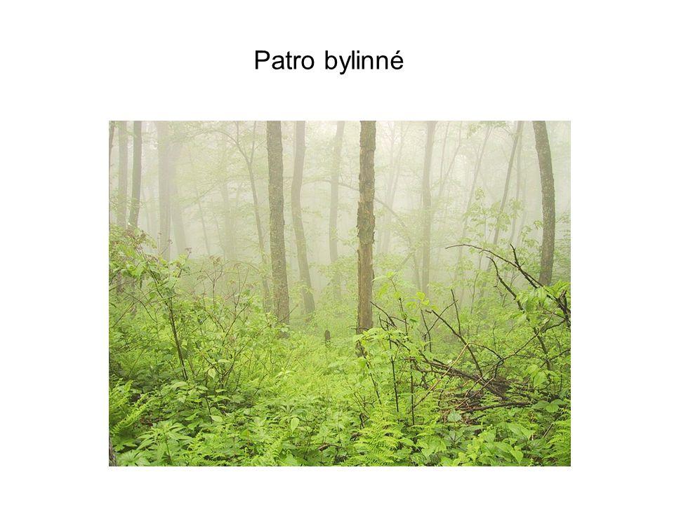 Patro bylinné