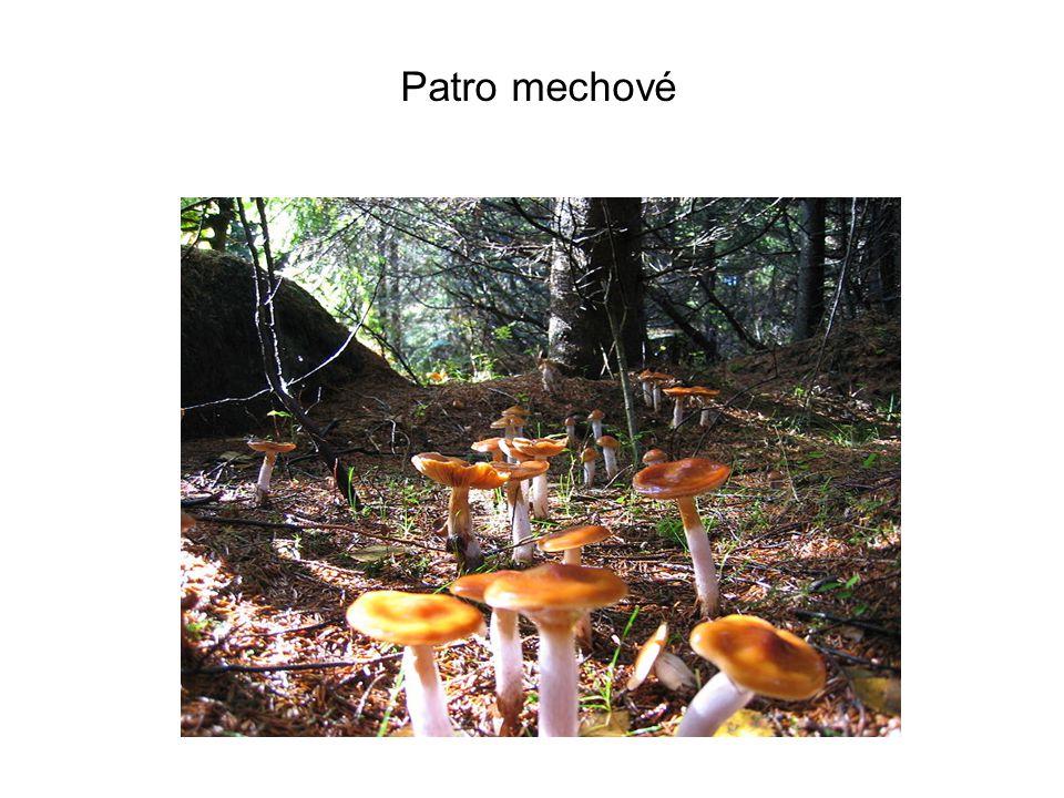 Pro každé lesní patro jsou typické určité druhy rostlin a živočichů, někteří živočichové se však pohybují v celém prostoru lesa a v některém patru pouze převládají (kos, veverka, mravenci, klíšťata apod.).