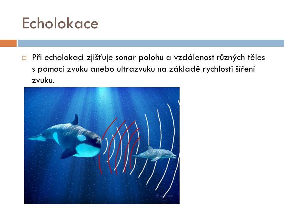 Echolokace  Při echolokaci zjišťuje sonar polohu a vzdálenost různých těles s pomocí zvuku anebo ultrazvuku na základě rychlosti šíření zvuku.