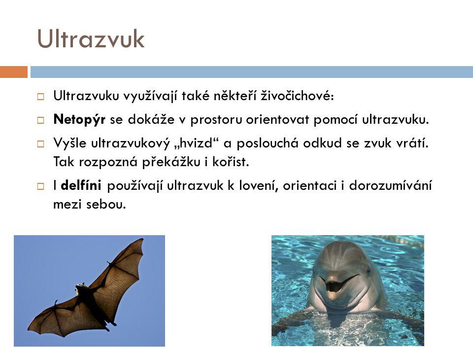 """Ultrazvuk  Ultrazvuku využívají také někteří živočichové:  Netopýr se dokáže v prostoru orientovat pomocí ultrazvuku.  Vyšle ultrazvukový """"hvizd"""" a"""