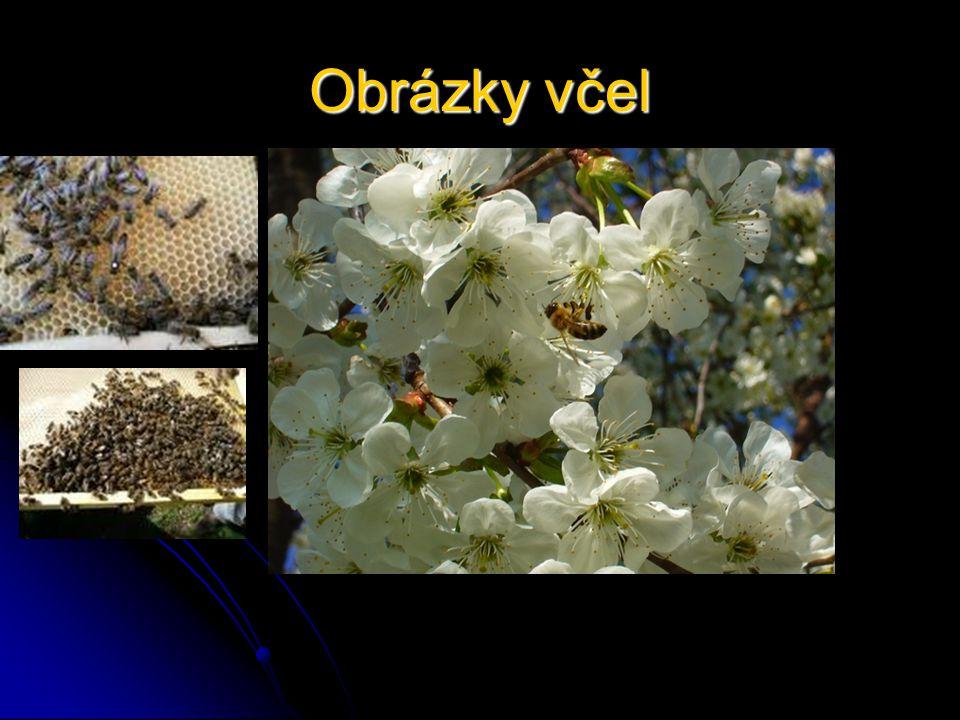 Obrázky včel