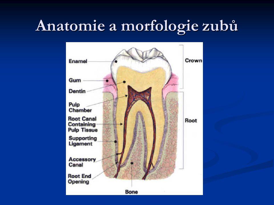 Anatomie a morfologie zubů