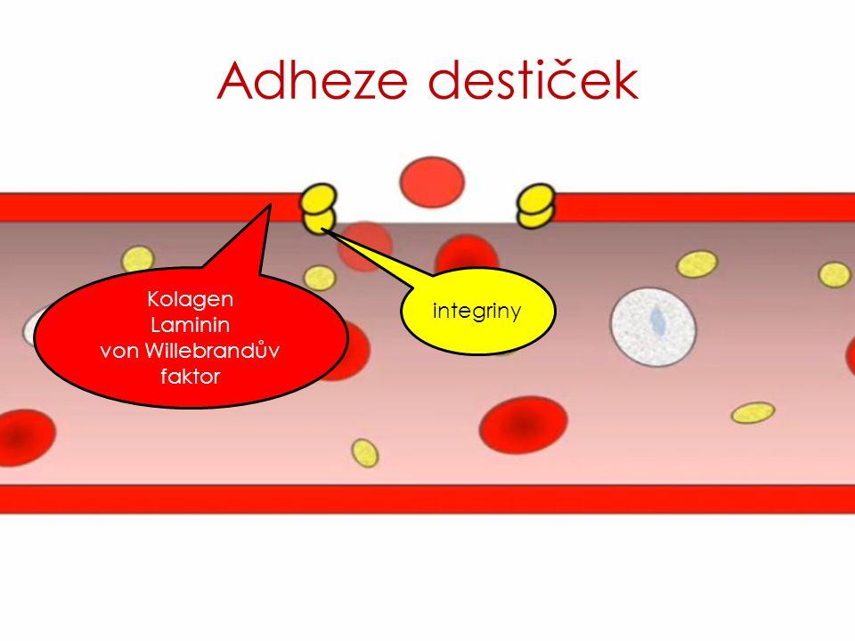 Adheze destiček integriny Kolagen Laminin von Willebrandův faktor