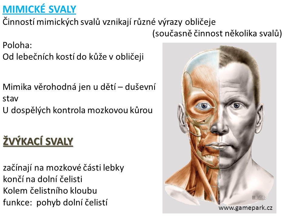 MIMICKÉ SVALY Činností mimických svalů vznikají různé výrazy obličeje (současně činnost několika svalů) Poloha: Od lebečních kostí do kůže v obličeji