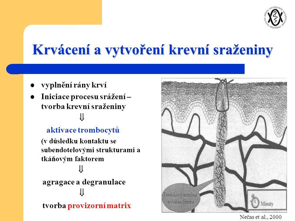 Krvácení a vytvoření krevní sraženiny vyplnění rány krví Iniciace procesu srážení – tvorba krevní sraženiny  aktivace trombocytů (v důsledku kontaktu