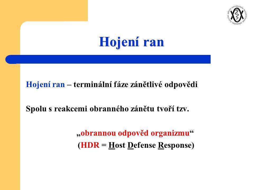 """Hojení ran Hojení ran – terminální fáze zánětlivé odpovědi Spolu s reakcemi obranného zánětu tvoří tzv. """"obrannou odpověd organizmu"""" (HDR = Host Defen"""