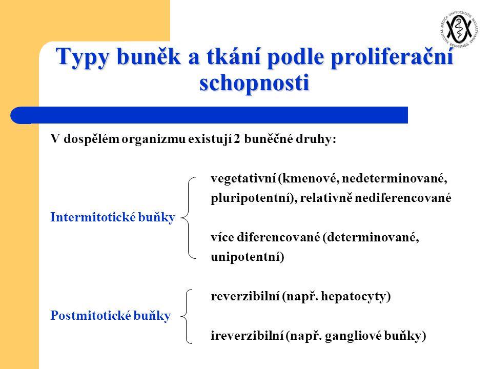 Typy buněk a tkání podle proliferační schopnosti V dospělém organizmu existují 2 buněčné druhy: vegetativní (kmenové, nedeterminované, pluripotentní),