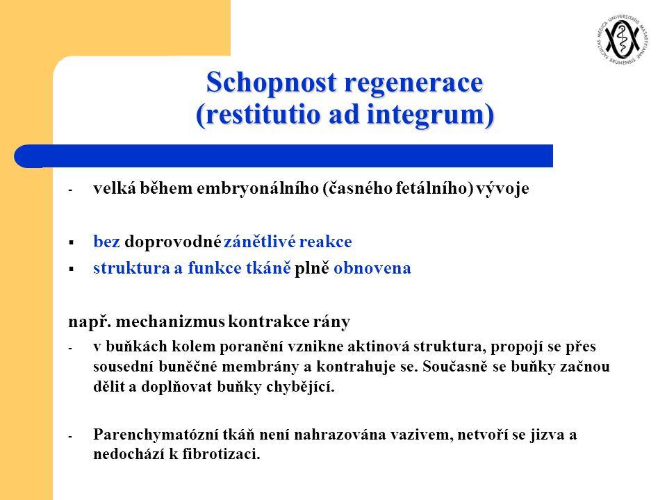 Schopnost regenerace (restitutio ad integrum) - velká během embryonálního (časného fetálního) vývoje  bez doprovodné zánětlivé reakce  struktura a f