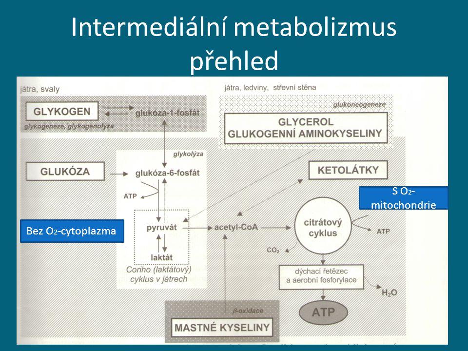 Intermediální metabolizmus přehled Bez O 2 -cytoplazma S O 2 - mitochondrie
