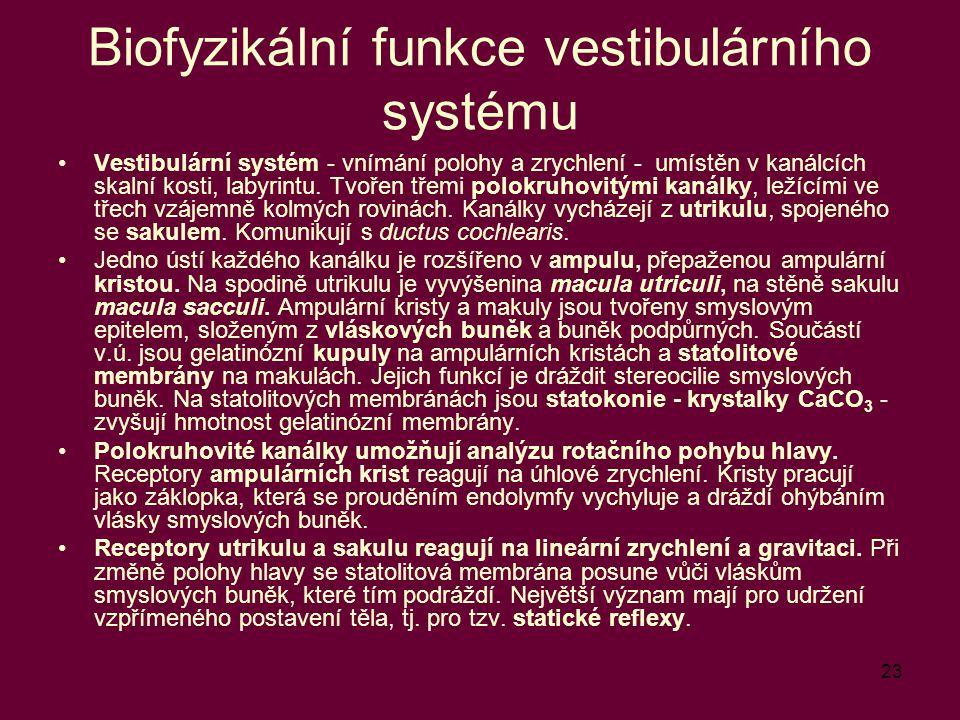 23 Biofyzikální funkce vestibulárního systému Vestibulární systém - vnímání polohy a zrychlení - umístěn v kanálcích skalní kosti, labyrintu. Tvořen t