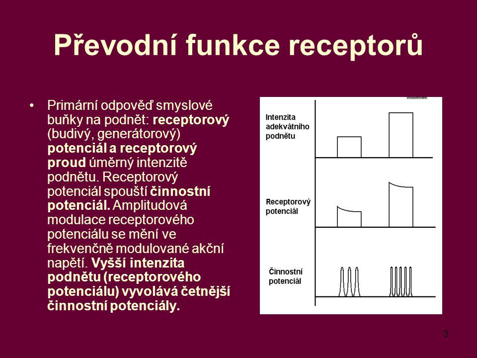3 Převodní funkce receptorů Primární odpověď smyslové buňky na podnět: receptorový (budivý, generátorový) potenciál a receptorový proud úměrný intenzitě podnětu.