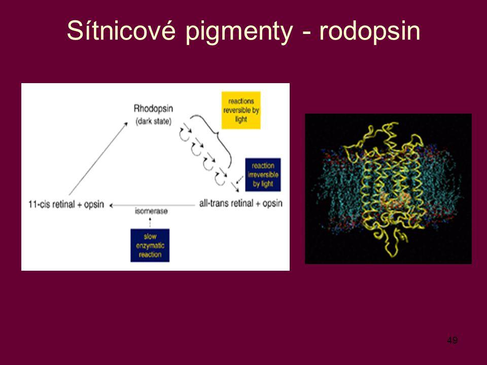49 Sítnicové pigmenty - rodopsin