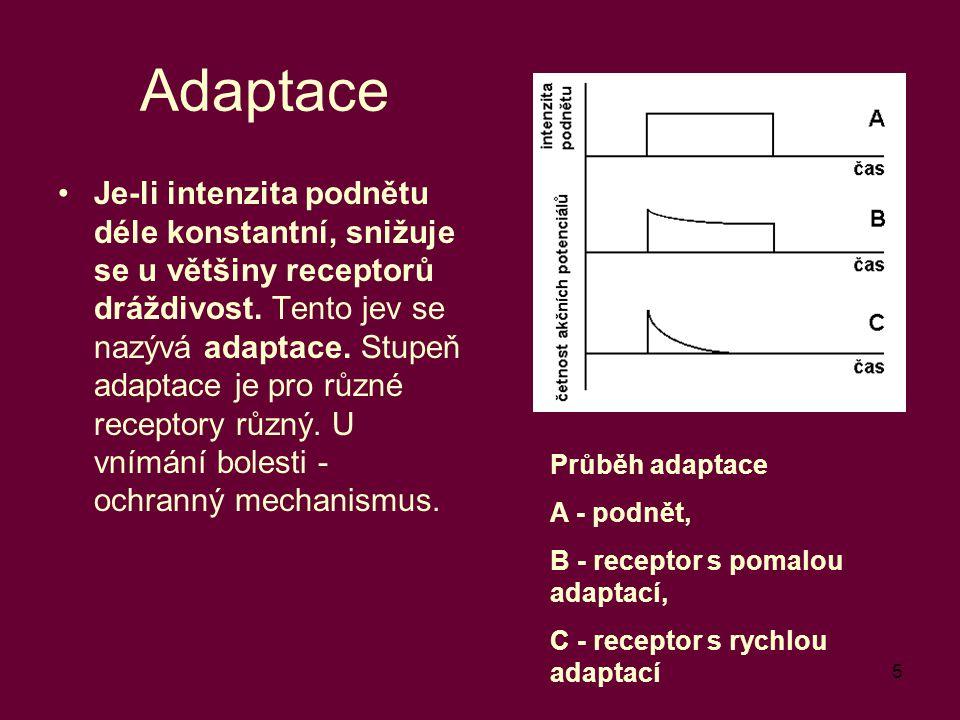 5 Adaptace Je-li intenzita podnětu déle konstantní, snižuje se u většiny receptorů dráždivost. Tento jev se nazývá adaptace. Stupeň adaptace je pro rů