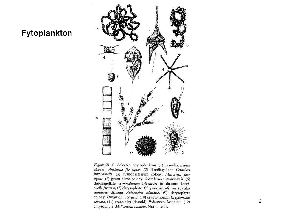 13 Vztah organismů k proudění škála: rheobiont - limnobiont Adaptace rostlin na proudění vláknité řasy a sinice přichycují se pomocí rhizoidů různých způsobů ukotvení přilepení kořenující makrovegetace tvarové a velikostní odchylky oproti druhům ze stojatých vod