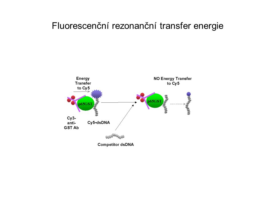 Fluorescenční rezonanční transfer energie