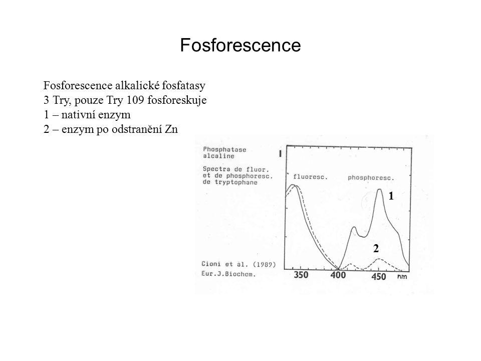 Fosforescence Fosforescence alkalické fosfatasy 3 Try, pouze Try 109 fosforeskuje 1 – nativní enzym 2 – enzym po odstranění Zn 1 2