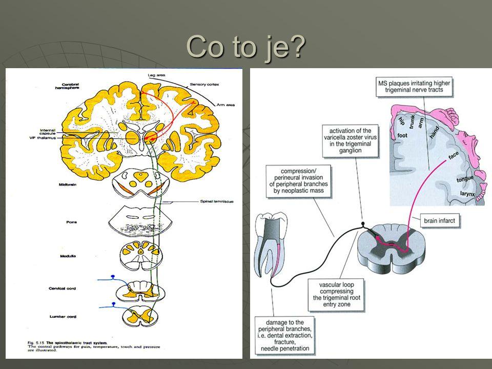 Receptory:  zakončení dendritů aferentních nervů či specializované bky – citlivost na určitý druh dráždění;  transformace na elektrické potenciály;  adekvátní x neadekvátní dráždění.