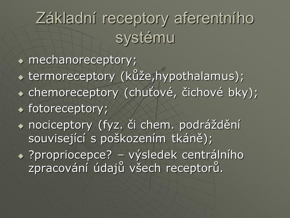 Základní receptory aferentního systému  mechanoreceptory;  termoreceptory (kůže,hypothalamus);  chemoreceptory (chuťové, čichové bky);  fotorecept
