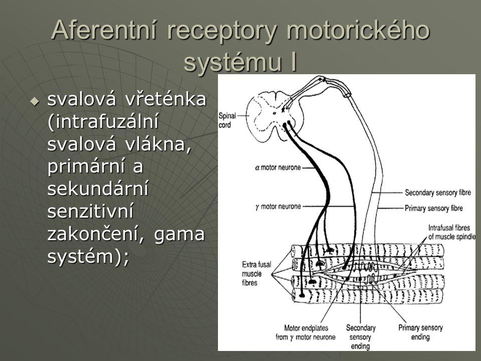 Aferentní receptory motorického systému I  svalová vřeténka (intrafuzální svalová vlákna, primární a sekundární senzitivní zakončení, gama systém);