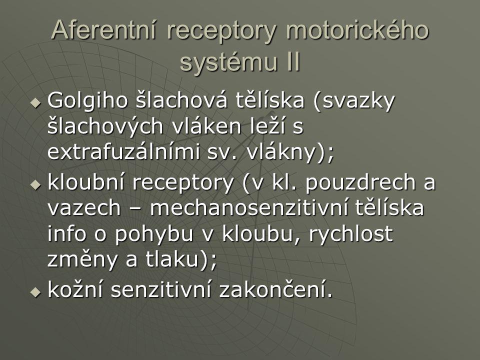 Aferentní receptory motorického systému II  Golgiho šlachová tělíska (svazky šlachových vláken leží s extrafuzálními sv. vlákny);  kloubní receptory