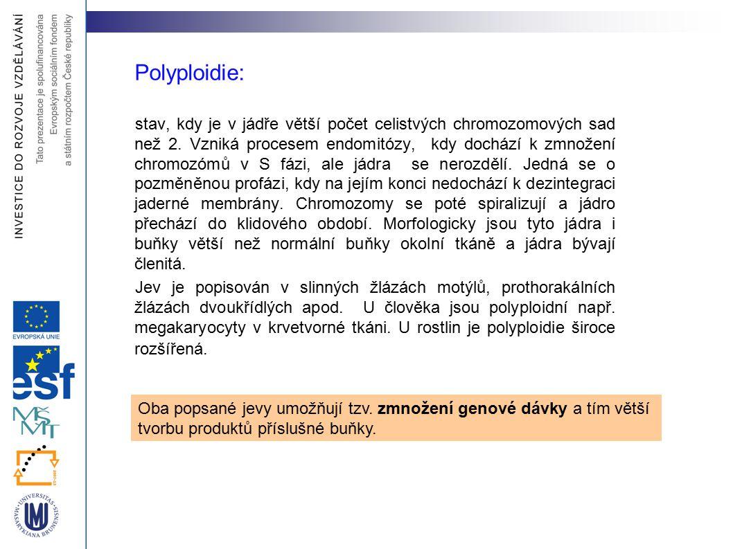 Polyploidie: stav, kdy je v jádře větší počet celistvých chromozomových sad než 2. Vzniká procesem endomitózy, kdy dochází k zmnožení chromozómů v S f