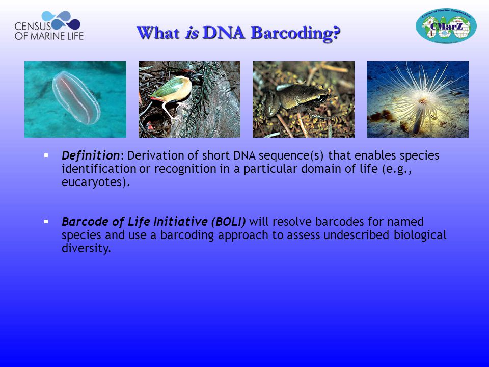 BARCODING LIFE, ILLUSTRATED Goals, Rationale, Results ppt v1.0 March 30, 2005 Mark Stoeckle, The Rockefeller University Paul E.